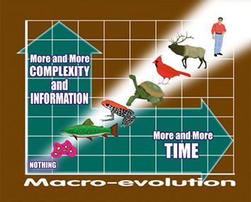 Evolution-Micro vs Macro